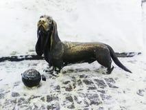 Um cão triste-eyed recolhe o dinheiro da doação fotografia de stock royalty free