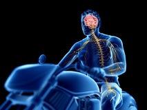 um cérebro dos motociclistas ilustração do vetor