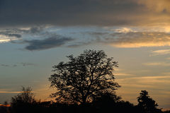 Um céu da noite Foto de Stock
