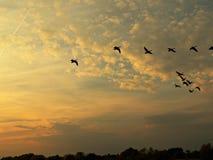 Um céu do por do sol Foto de Stock