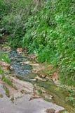 Um córrego da montanha da floresta Fotos de Stock