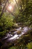 Um córrego na floresta húmida Fotos de Stock