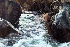 Um córrego que corre através das pedras com gelo Imagens de Stock