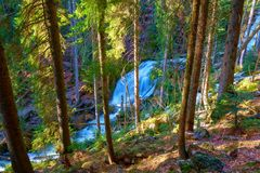 Um córrego selvagem cruza a floresta bávara imagem de stock