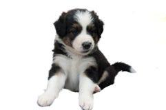Um cachorrinho bonito em um fundo branco fotos de stock royalty free