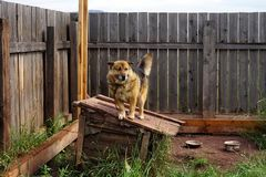 Um cachorrinho bonito está no telhado de seu canil de madeira fotos de stock royalty free