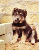 Um cachorrinho bonito faz o assento em uma jarda Fotografia de Stock