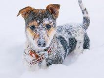 Um cachorrinho coberto de neve com um colar anticipa, um day_ do inverno Foto de Stock