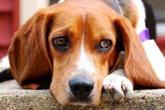 Um cachorrinho (de vista) triste aprecia o calor imagens de stock royalty free