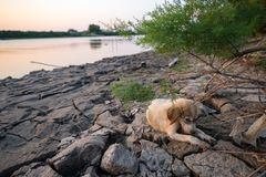 Um cachorrinho desabrigado pequeno fotografia de stock royalty free