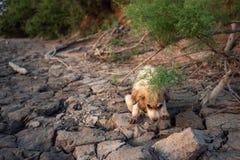 Um cachorrinho desabrigado pequeno imagens de stock
