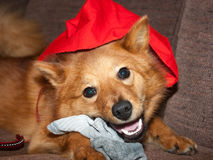 Um cachorrinho do Natal foto de stock royalty free