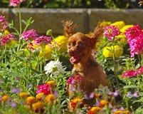Um cachorrinho feliz com orelhas macias senta-se em cores bonitas Um cão pequeno agradável está descansando em uma cama de flor Fotografia de Stock Royalty Free