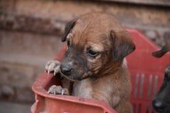 Um cachorrinho pequeno imagens de stock