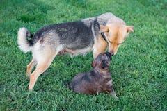 Um cachorrinho pequeno perto de sua mamã Bebê e Mama_ imagens de stock