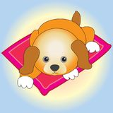 Um cachorrinho pequeno que descansa no tapete Fotos de Stock Royalty Free