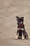 Um cachorrinho que senta-se na areia Imagens de Stock