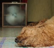 Um cachorro quente foto de stock