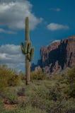 Um cacto do saguaro está perto das montanhas da superstição fora de Phoenix, o Arizona Imagem de Stock Royalty Free