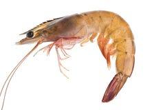 Um camarão Imagens de Stock Royalty Free