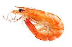 Um camarão cozinhado fotografia de stock royalty free