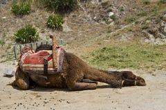 Um camelo de descanso no cappadocia fotos de stock