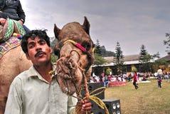 Um camelo e seu cavaleiro Imagens de Stock