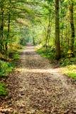Um caminho coberto pelas folhas em uma floresta densa com os raios filtrados Imagem de Stock