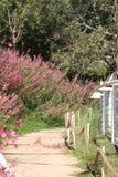 Um caminho entre flores e árvores Imagens de Stock