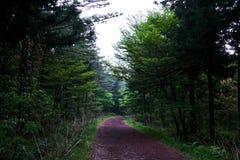 Um caminho isolado na floresta de Saryuni com árvores alinhou em ambos os lados do trajeto da sujeira, ilha de Jeju, Coreia do Su imagem de stock royalty free