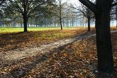 Um caminho no parque outonal Imagem de Stock Royalty Free