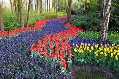 Um campo colorido dos tulips e dos hyacinths Foto de Stock Royalty Free