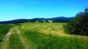 Um campo com as polias do feno foto de stock