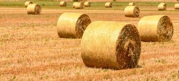 Um campo com os pacotes da palha após a colheita Fotos de Stock