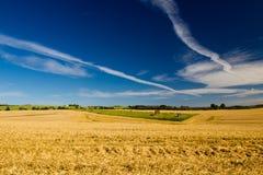 Um campo da colheita em Dinamarca imagens de stock royalty free