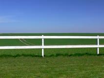 Um campo da grama verde. Fotografia de Stock Royalty Free