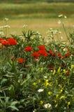 Um campo da mola floresce (a profundidade de campo rasa) Foto de Stock