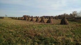 Um campo da pilha do milho de Amish, monte de feno, colheita Fotografia de Stock