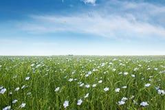 Um campo das flores azuis do linho Imagem de Stock