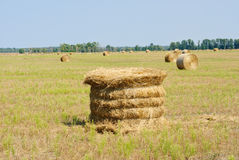 Um campo de exploração agrícola no campo encheu-se com os pacotes de feno Fotos de Stock Royalty Free