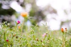 Um campo de flor Fotografia de Stock