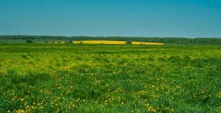 Um campo de flores amarelas brilhantes Fotos de Stock Royalty Free