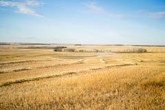 Um campo de trigo Imagens de Stock