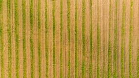 Um campo de trigo colhido imagens de stock