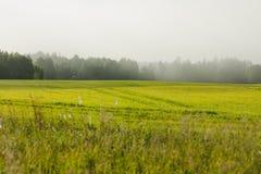 Um campo de trigo com rotinas distintas do trator em uma manhã do início do verão imagens de stock