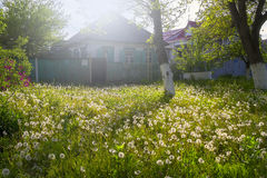 Um campo do dente-de-leão na frente da casa velha Foto de Stock Royalty Free