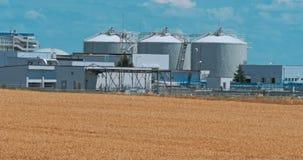 Um campo do trigo maduro dourado Estação da colheita video estoque