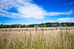 Um campo dos wildflowers entre um céu azul com as nuvens macias brancas fotografia de stock
