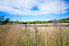 Um campo dos wildflowers entre um céu azul com as nuvens macias brancas foto de stock royalty free
