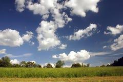 Um campo e um céu Imagens de Stock